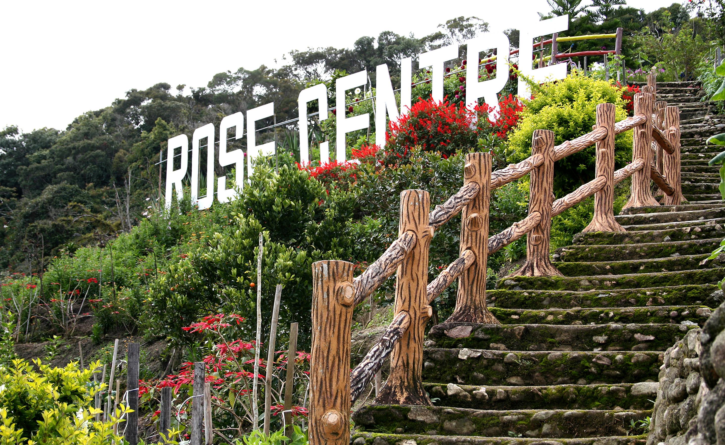 Robertson Rose Garden | SailorsTales