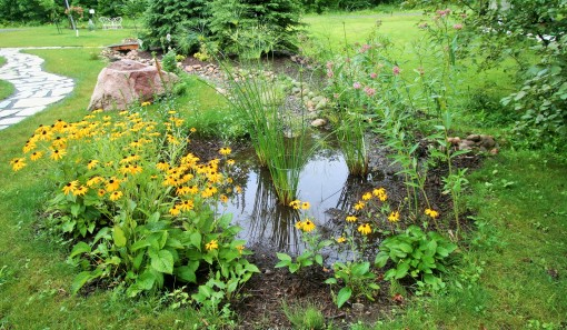 The Rain Garden in action.