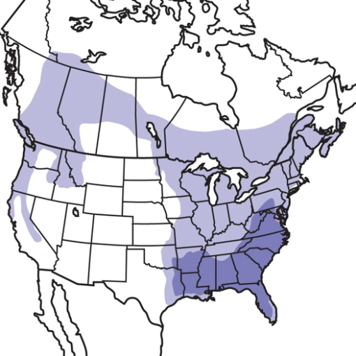 The light purple shows the uncommon areas where Pileated Woodpeckers can be found. They are more common the darker area.