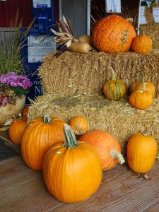 dsc01472-2-pumpkins-and-hay-bales