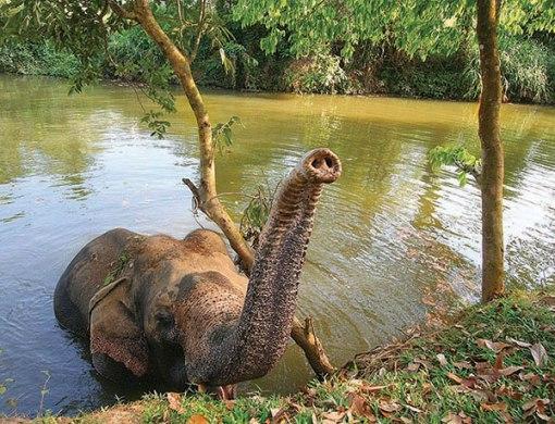Elephant Kandy Sri Lanka