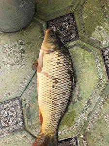 Khiva seafood