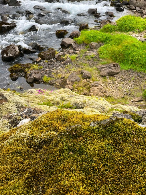 The variety of moss and lichen is amazing!