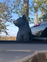 Big Bear takes a ride.