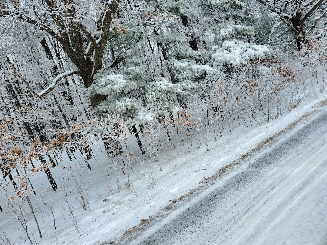 Forest Road with hoarfrost