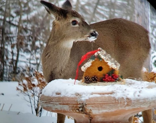 Deer by edible birdhouse