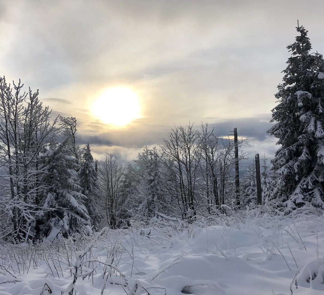 Snow covered woods with sun