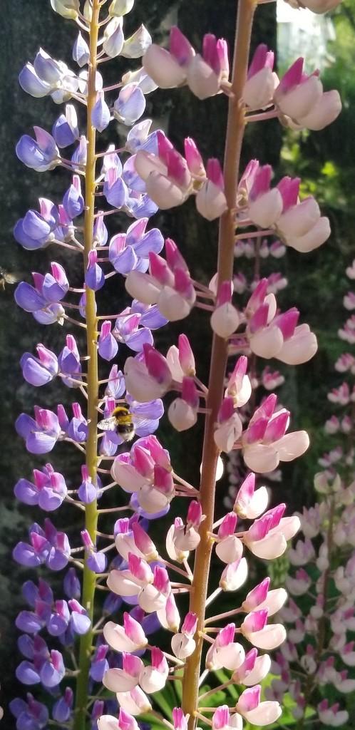 Iceland botanicals